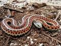 3歳少年「前世はヘビ」 体に証拠も ― 生まれ変わり現象のレアケース=タイ