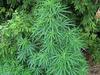 """英国「大麻の森」発見で蒸し返される、嵐・大野智の""""大麻吸引疑惑""""報道"""