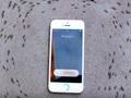 """iPhoneの電磁波で蟻が""""死ぬまで""""グルグル回る!? 「デス・スパイラル」現象の恐怖映像!!"""