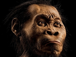 人類史の解明のヒントか! 280万年前のヒト属新種「ホモ・ナレディ」とは?