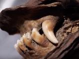 まるで生きているよう! 1万2,000年前の「子犬のミイラ」が永久凍土で発見される=シベリア