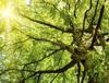 """「温暖化の嘘がバレたな」地球の樹木が従来推定の7倍""""3兆本""""に驚愕の声"""