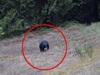 「真っ青な顔のクマ」が発見される! 突然変異か、イタズラか!?