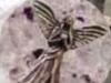 月に文明は存在した!? アポロ11号が持ち帰った石に「天使の彫刻」が施されていた!!