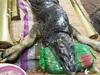 「ワニと水牛」のハイブリッド!? タイの農村に謎の生物が出現!!