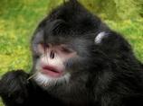 歩く魚、青い目の蛙、くしゃみ止まらぬ猿…! ヒマラヤで200以上の「不思議な新種生物」が発見