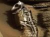 火星版・コモドドラゴンが発見される! どう見ても先史時代のモンスター!!