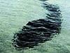 爬虫類であり、哺乳類!? 海に潜む謎のUMA「シーサーペント」の正体を研究家に聞いた!
