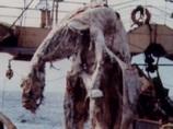 世界が驚愕! 日本で起きた「ニューネッシー事件」の真相と未だ暴かれぬ太平洋の謎の怪獣UMA!