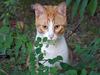 サングラスが必要な猫が登場!