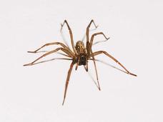 約800メートルにおよぶ巨大クモの巣が米メンフィスに出現!