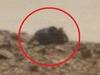 火星で超巨大ネズミが発見される! 尻尾や耳がクッキリ!! NASAはなぜ調査しない?