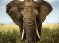 日本も大いに関係している!  22頭の死骸と象牙35本、相次ぐゾウの毒殺=ジンバブエ