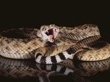 毒蛇に噛まれ、死ぬまでを記録した科学者 ― 最期の記述「午後1時30分…」
