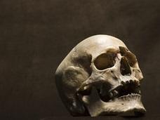 死に至る過程で脳は何を感じているのか ― 化学的に分析したプロセスの結果