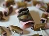 絶対に食べないと損! 「本当に美味しい昆虫ベスト5」を研究家が選出!