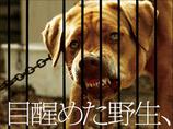 """人間への恨みが爆発! 実際に飼い主から捨てられ""""野獣""""と化した犬250匹が迫真の演技をする映画がヤバい!"""