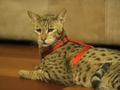 300万のハイブリッド猫も!? 異種交配で生まれたハイブリッド生物5選!