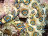 """死亡例も…日本近海の""""猛毒""""海洋生物5選! 痺れや脱力感、ジワジワとした痛み!!"""
