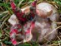 【閲覧注意】エイリアンの卵、遂に捕獲成功か? なんともおぞましい悪魔の指