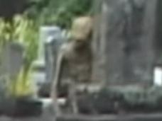 【衝撃動画】墓地に佇む淋しげな宇宙人!! やっぱり緑色の肌だった!