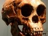 ホビットは独自の遺伝構成をもつ新種人類!? 歯の分析でわかった驚愕の事実
