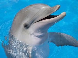 イルカの音波の可視化に成功→イルカから見た人間の姿は宇宙人だった!