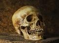 【毒薬の手帳】サリンの何千倍も強力! 世界最凶の猛毒「リシン」を徹底解説!!