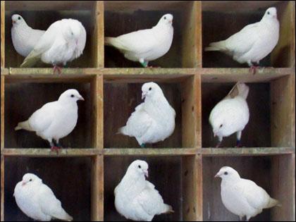 科学で解明できない「未知の繋がり」が発見される! 鳩の巣原理を覆した量子の性質とは?