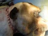 【衝撃】サルの頭部移植手術が成功、「残すは人間のみ」! 1日も早い倫理的問題の議論を!