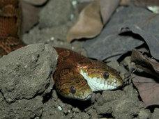 アメリカでヘビをパンツに隠す万引き事件が発生!