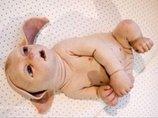 """米国では""""ブタ人間""""が作られている!?  動物の体内で人間の臓器を作る「キメラ技術」の恐怖"""