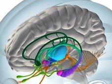 人間の脳は考えられていたよりも10倍(1ぺタバイト)記憶できることが判明!