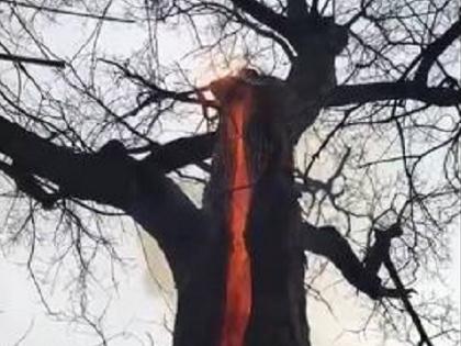 【衝撃動画】幹の内側だけメラメラ燃える「悪魔の木」!? 魔女の仕業か、自然現象か?=米・オハイオ州