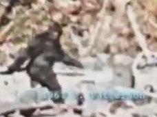 獣人「イエティ」が公式動物となる日も近い? ビッグフット「パターソン・フィルム」の真実も…!