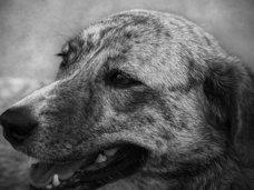 【閲覧注意】磔にされた犬の残酷すぎる動画…!動物の権利活動家、拡散呼びかけ=印
