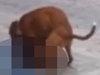 【閲覧注意】人間の男が犬に激しくレイプされる ― 逆獣姦の決定的瞬間