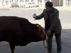 【閲覧注意】道端で得意気に牛を殺す男! 食品の安全性と鮮度を証明するため?=中国