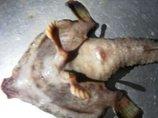 5本指の足、人間の鼻、ヌメッとした肌…! カリブ海で発見された怪奇生物が謎すぎる