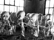 【写真】悪夢のような「セルロイド人形製造過程」 ― ドロドロホラーの域を超えた当時の現場とは?