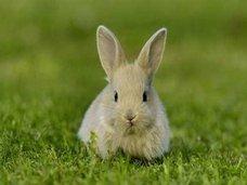 巨大ウサギが飼い主を募集中!