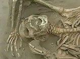 苦悶の表情、不自然に曲がった骨…寺院で発掘された6体の遺骨! プレ・インカ文明、凄惨な生贄儀式が明らかに=ペルー