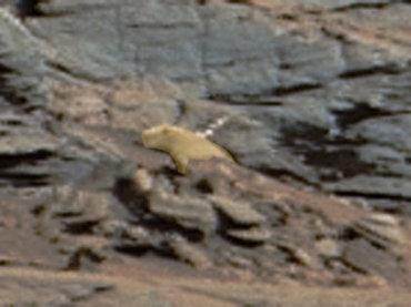 スクープ! 火星に巨大プレーリードッグが生息していた! 岩陰から様子をうかがう姿がクッキリ撮影される