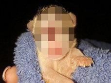 【閲覧注意】続発する「単眼症のネコ」 ― 奇形のシンクロニシティは凶事の前触れか!?