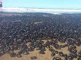 突然、数百万匹のカブトムシが海岸に降り注ぐ怪奇現象発生! UFOが投棄した可能性=アルゼンチン