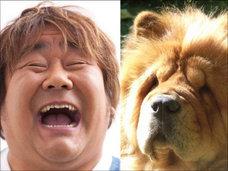 SMAPキムタクも犬に似ている? 犬顔の男性芸能人8選!