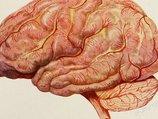 【超・閲覧注意】脳はこうして摘出される