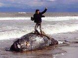 【大炎上のクジラ死骸写真】「命の冒涜というよりも…」複数の写真家に意見を聞いてみた