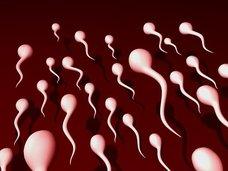 """やはり精子は美肌効果バツグン、調味料にも…!? 学校では教えてくれない""""精子の秘密""""5選"""