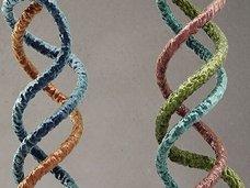 """""""三重らせん""""構造のDNAを持つ子どもがいる!? 「超人類」への進化が始まった可能性!"""